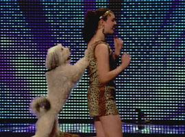 Britain's Got Talent: Dognapping Fears For Pudsey