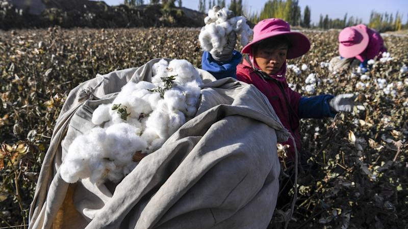 Chinese medicine herbs could defeat devastating cotton virus, study suggests