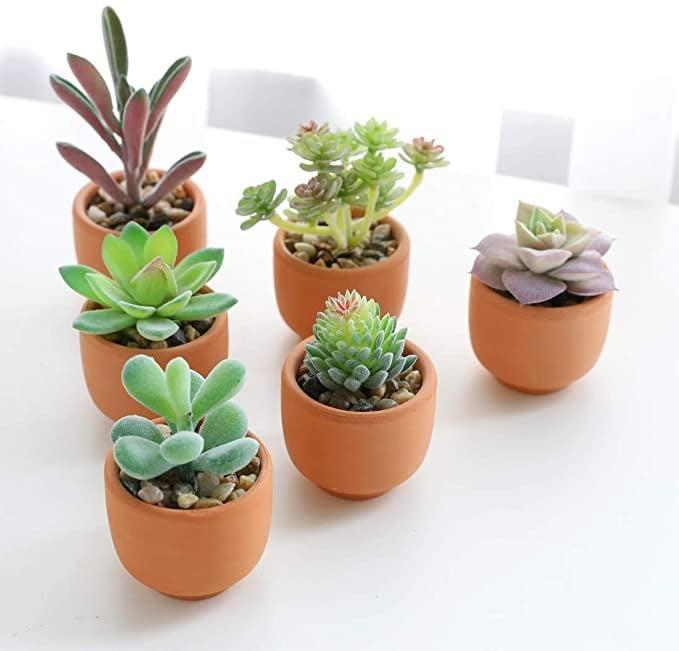<p>You can never go wrong with terracotta, and the <span>Artificial Succulents in Terracotta Pots (6pcs )</span> ($20) does it right!</p>