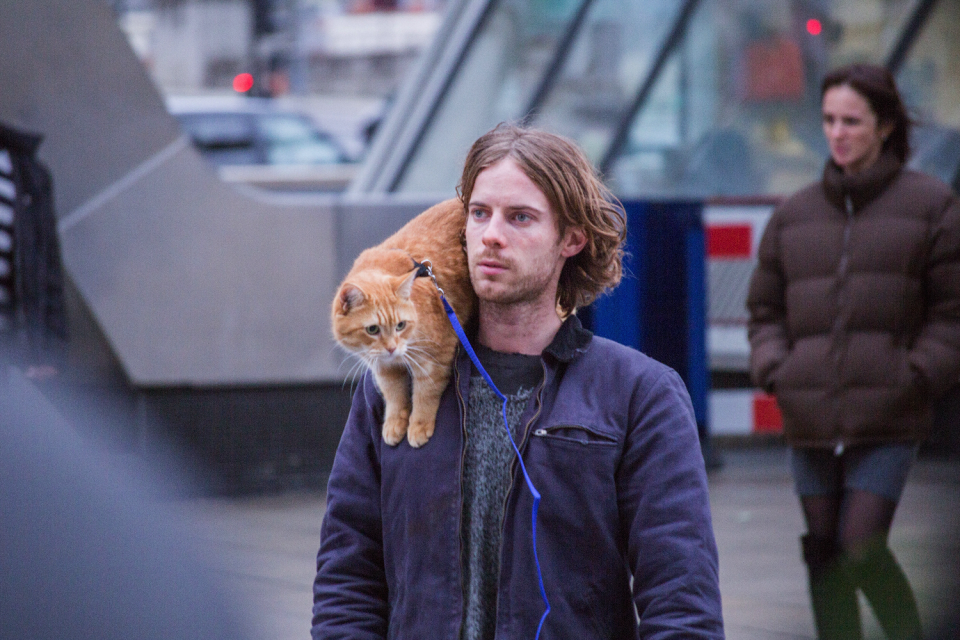 <p>A Street Cat Named Bob (Shaw Organisation) </p>