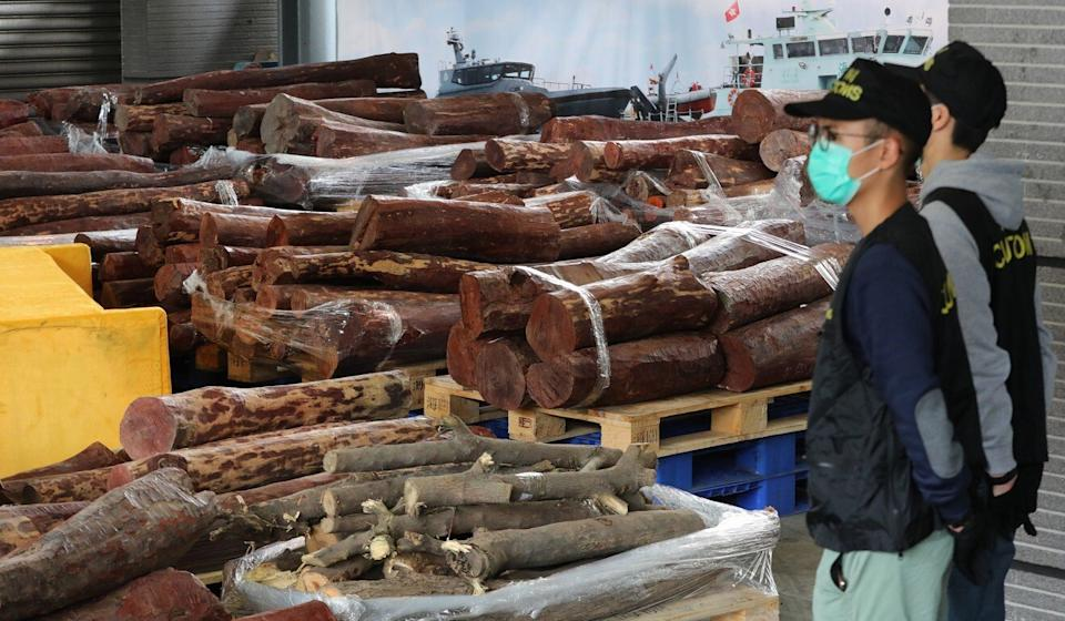 Protected wood grabbed third place in terms of high-value seizures this year. Photo: Felix Wong