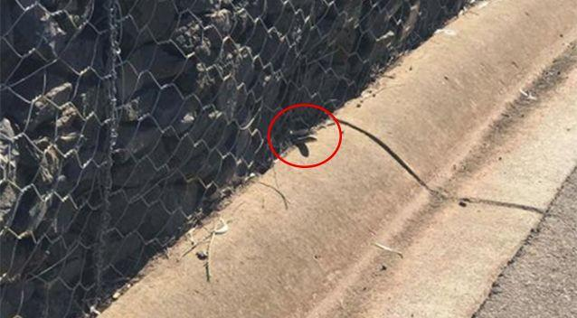The snake was seen poking its head outside the rock wall. Source: Facebook