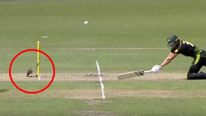 Australian captain Meg Lanning got luck when what should have been an easy run-out deflected off the stump mic housing, sparing her wicket. Picture: Cricket Network