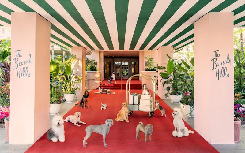 There's always a red carpet at the Beverly Hills Hotel - www,graymalin.com @graymalin