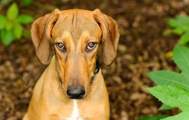 That 'guilty' look that your dog is giving you isn't ...