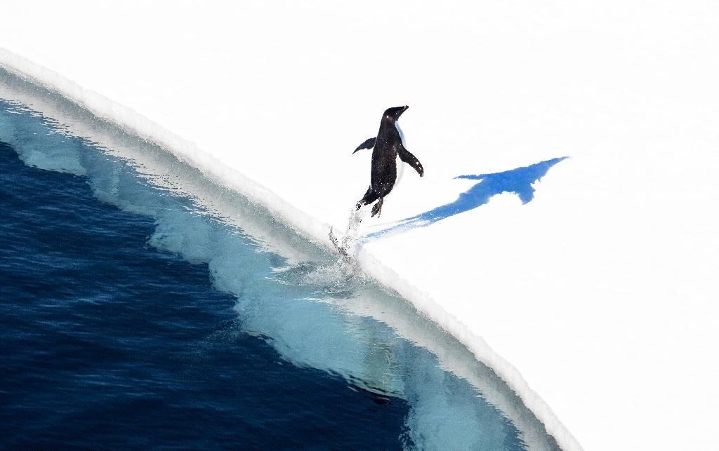 An adelie penguin jumps onto the ice in the Ross Sea in Antarctica (AFP Photo/John Weller)