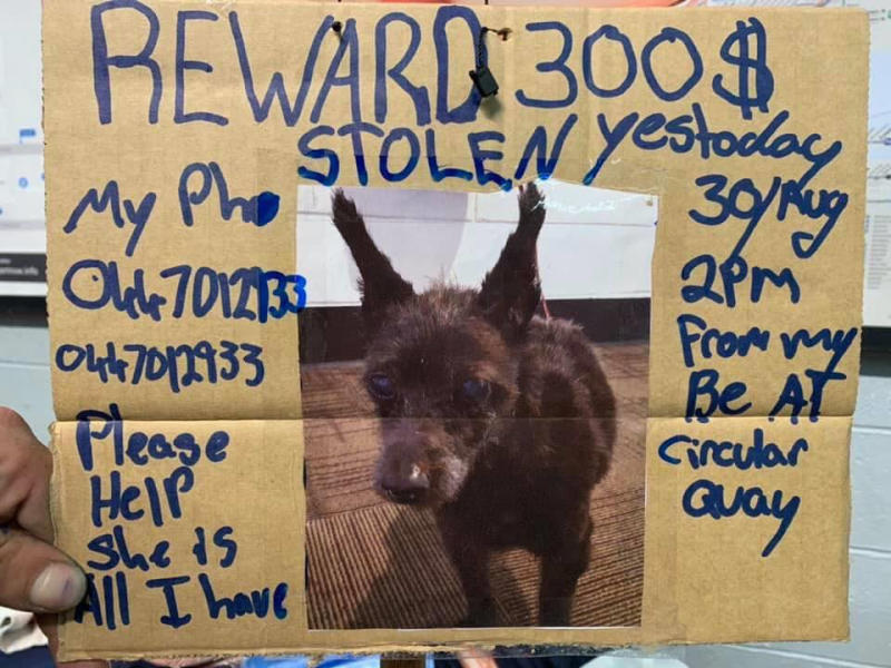 Nathan's sign shows a photo of Shaggy and an offered of a $300 reward for her safe return. Source: Facebook/Arthur & Co