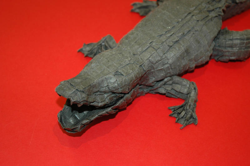 This undated photo courtesy of Origamido in Haverhill, Mass., shows a close-up view of a origami model of an alligator. Designed by Micheal G. LaFosse, the finished piece is 18 inches long. It was folded from a 6-foot by 6-foot piece of paper made by Richard Alexander. (AP Photo/Origamido)