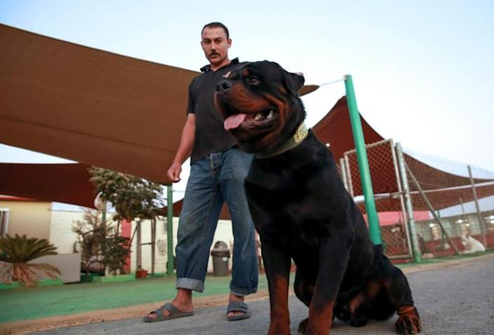 Despite taking a bite out of their wallets, Jordanians appear to prefer larger breeds, such as German shepherds, rottweilers and huskies (AFP Photo/Khalil MAZRAAWI)