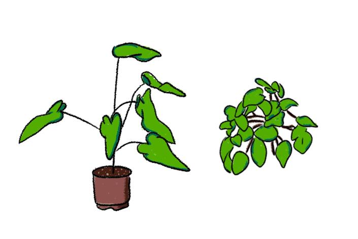 """Mark Redito's favorite plants are philodendrons and pothos. <span class=""""copyright"""">(Micah Fluellen / Los Angeles Times)</span>"""