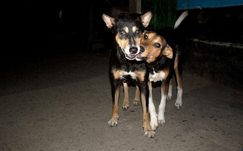Activists have in recent years successfully campaigned to stop mass cullings of street dogs in Dhaka and other cities