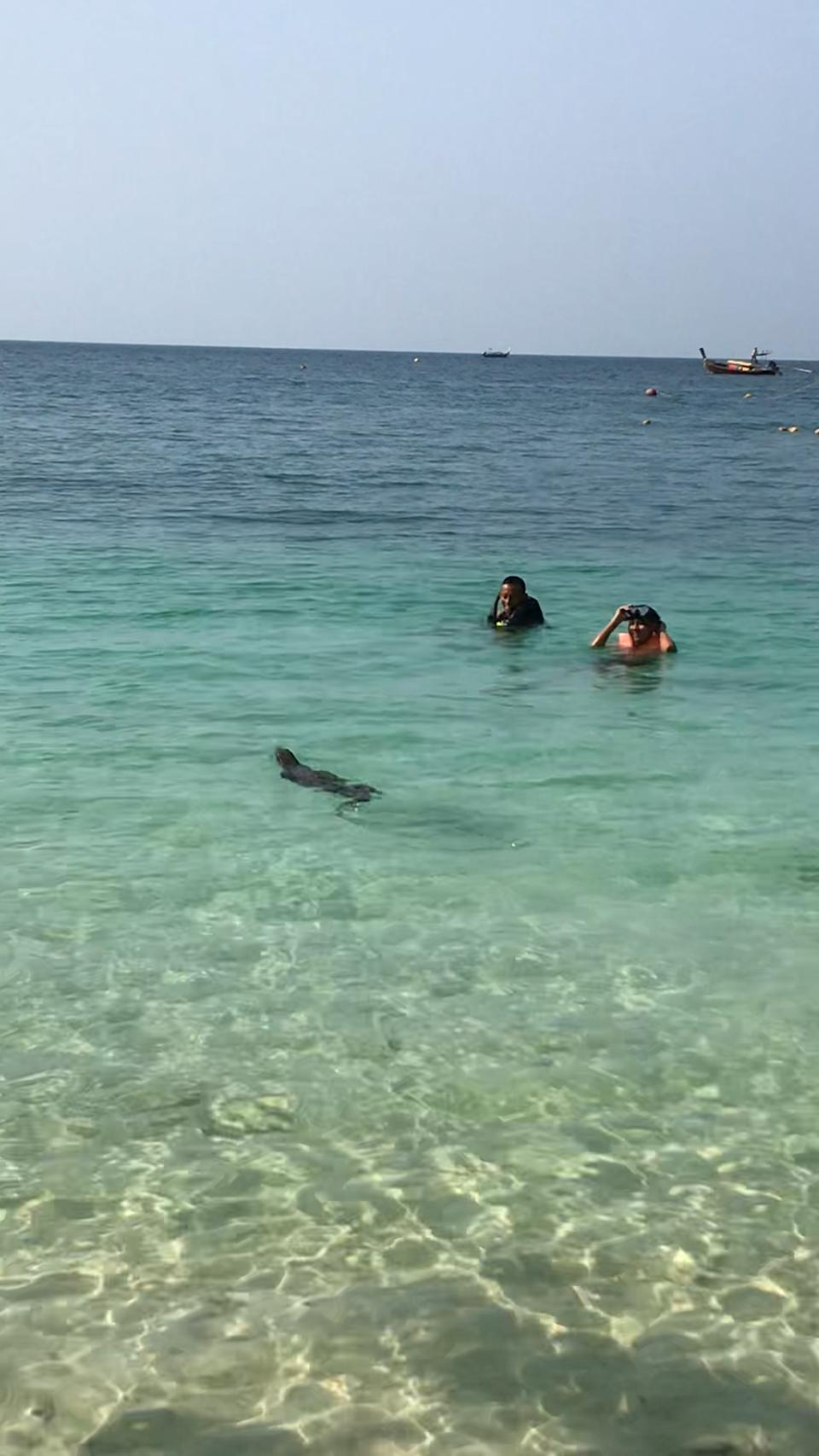 The large monitor lizard swam metres away from tourists. Source: Viral Press/Australscope