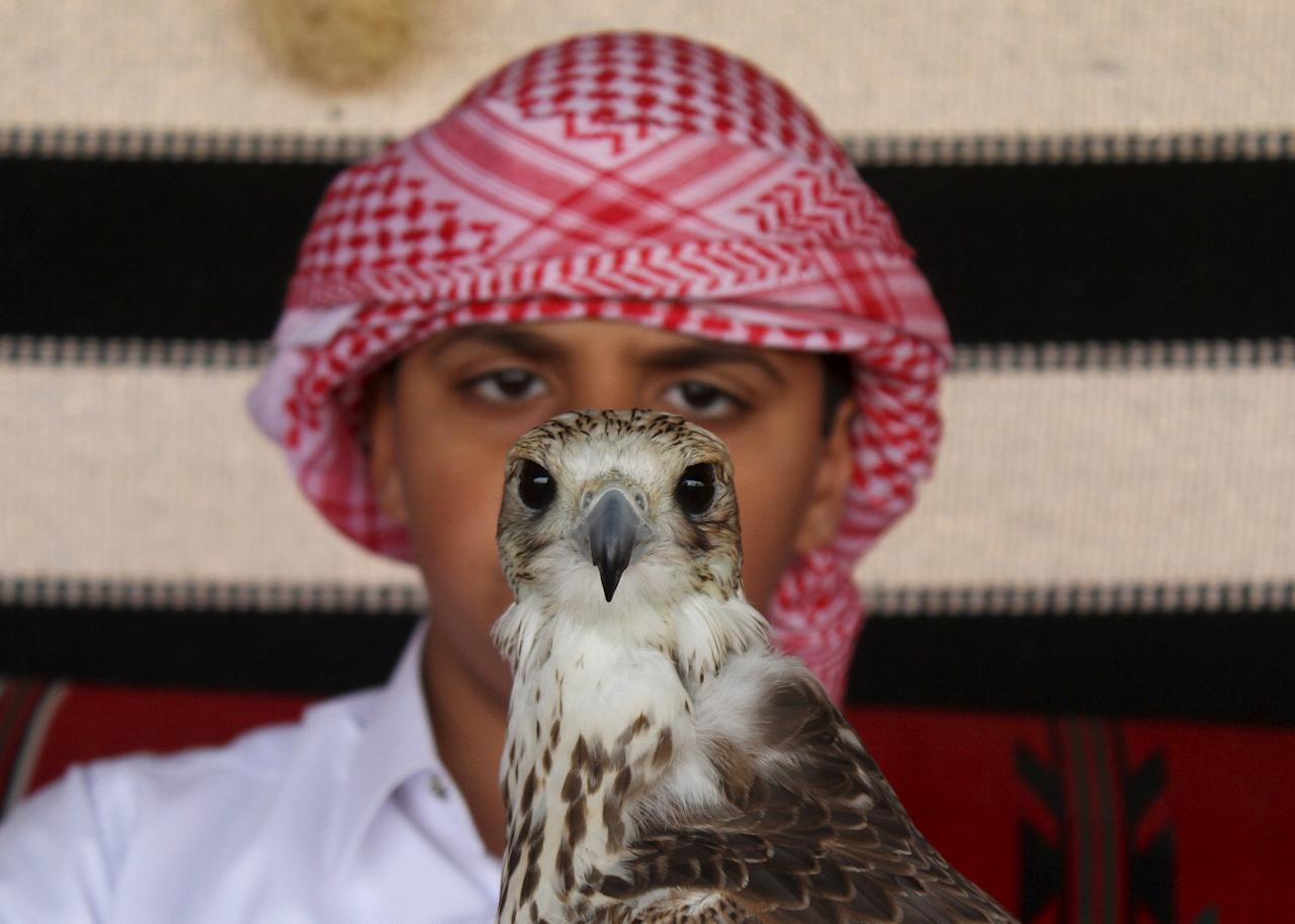 Boy holds a falcon during Qatar International Falcons and Hunting Festival at Sealine desert,