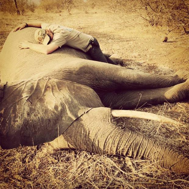 prince-harry-elephant