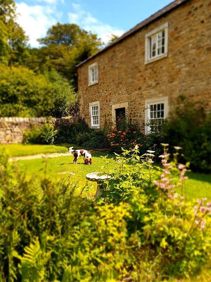 """<p>Nestled in the middle of a 475-acre estate near Durham, this dog-friendly B&B is a listed Georgian house decked out with elegant furnishings, sofas you can sink into and roaring log fires at every turn. At <a href=""""https://go.redirectingat.com?id=127X1599956&url=https%3A%2F%2Fwww.booking.com%2Fhotel%2Fgb%2Fburnhopeside-hall.en-gb.html%3Faid%3D2070935%26label%3Ddog-friendly-bed-breakfast&sref=https%3A%2F%2Fwww.countryliving.com%2Fuk%2Ftravel-ideas%2Fdog-friendly%2Fg35121802%2Fdog-friendly-bed-and-breakfast-uk%2F"""" rel=""""nofollow noopener"""" target=""""_blank"""" data-ylk=""""slk:Burnhopeside Hall"""" class=""""link rapid-noclick-resp"""">Burnhopeside Hall</a>, there are even great sash windows looking out over the woodlands for you to channel your inner-Pride and Prejudice.</p><p>Resident springer spaniels Max and Barney are welcoming to all pooches at the dog-friendly B&B, so bring your pooch and stroll the magnificent lawns or cycle alongside the river. Oversized beds, luxurious linen and fresh flowers also await. </p><p><a class=""""link rapid-noclick-resp"""" href=""""https://go.redirectingat.com?id=127X1599956&url=https%3A%2F%2Fwww.booking.com%2Fhotel%2Fgb%2Fburnhopeside-hall.en-gb.html%3Faid%3D2070935%26label%3Ddog-friendly-bed-breakfast&sref=https%3A%2F%2Fwww.countryliving.com%2Fuk%2Ftravel-ideas%2Fdog-friendly%2Fg35121802%2Fdog-friendly-bed-and-breakfast-uk%2F"""" rel=""""nofollow noopener"""" target=""""_blank"""" data-ylk=""""slk:CHECK AVAILABILITY"""">CHECK AVAILABILITY</a></p>"""