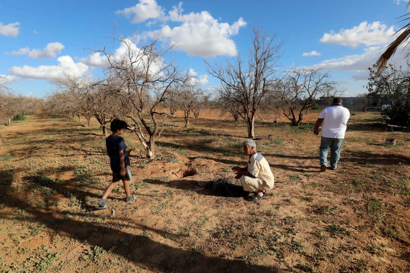View shows the orange trees field dried at Bouzid farm, after the clashes, in Ain Zara, Tripoli
