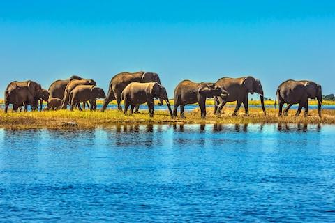 Botswana has more elephants than anywhere else in the world - Credit: getty
