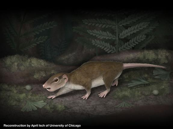 A reconstruction of the extinct rodentlike creature, now called Rugosodon eurasiaticus, which lived 160-million years ago on the lakeshores of what is now China.