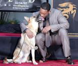 "<p>Will Smith poses with Abby, the dog from ""I Am Legend"" as he is honored with a hand and footprint ceremony at Grauman's Chinese Theatre December 10, 2007 in Los Angeles, California.</p>"