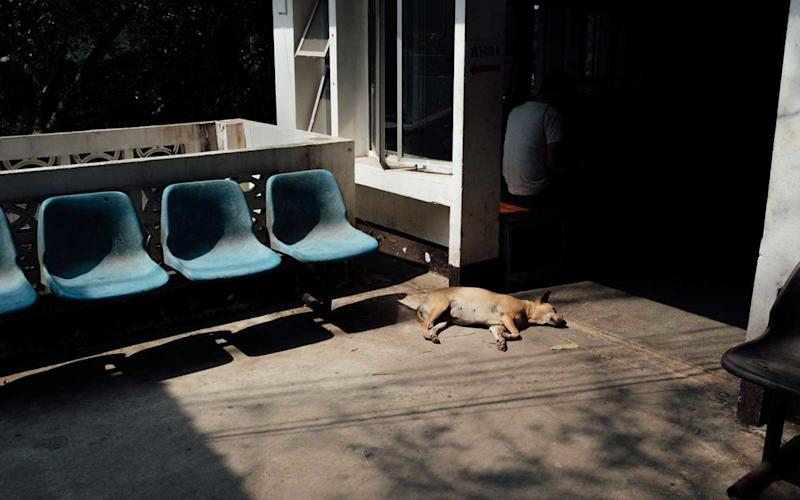 A dog laying in the sun outside of Doi Suthep Temple, Chiang Mai. | Stan Nalewski