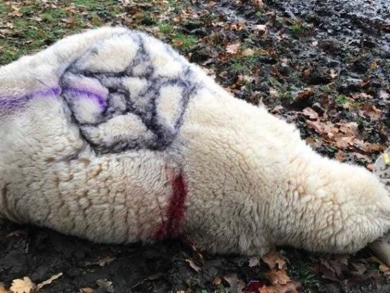 The dead sheep was covered in occult symbols (PA)