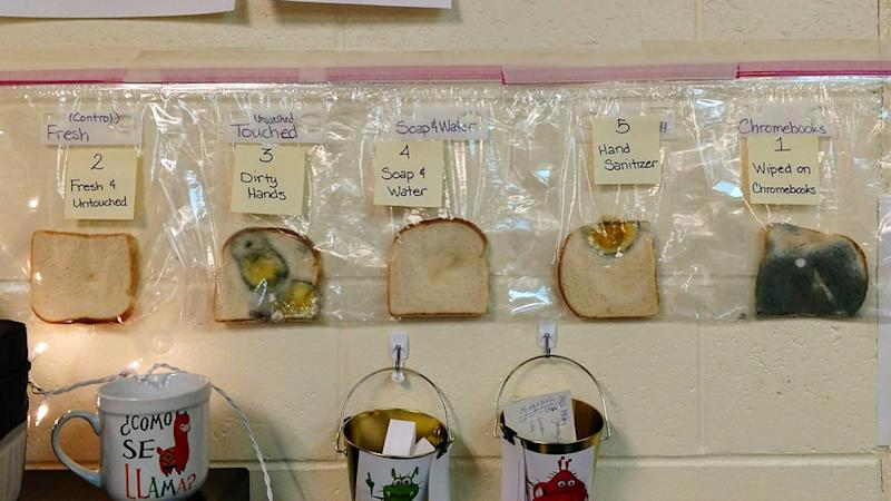 Bread displayed in plastic bags showing varied levels of bacteria.