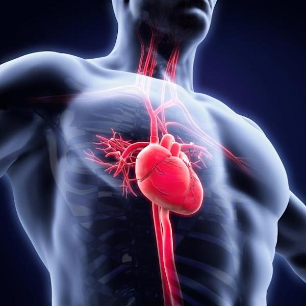 Cardiovascular Systems (CSII) to distribute limited editions of both 1.0-4.0mm Sapphire II PRO and 2.0-4.0mm Sapphire NC Plus non-compliant coronary balloons post the product launches in the market.