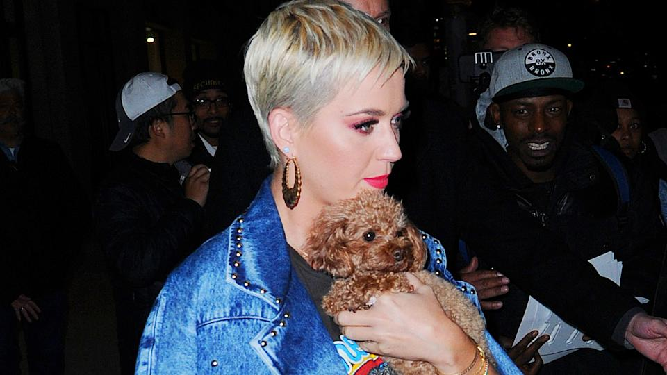 Katy Perry and her beloved Betty (Photo by Josiah Kamau/BuzzFoto via Getty Images)