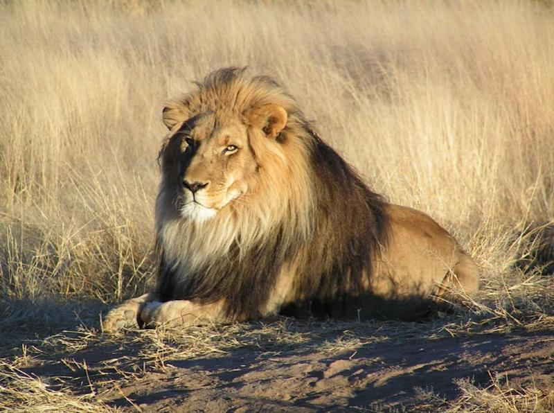 Simbakubwa is not closely related to big cats or any other mammalian carnivore alive today (SWNS)