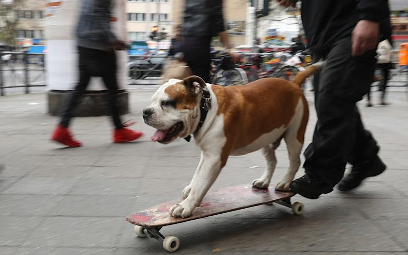 Best way to lose weight? Eat less, exercise, request a doggy bag in restaurants. - Getty Images Europe