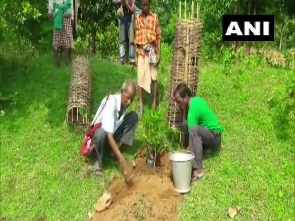 72-year-old 'Tree Teacher' plants more than 30,000 trees over 60 years (Photo/ANI)