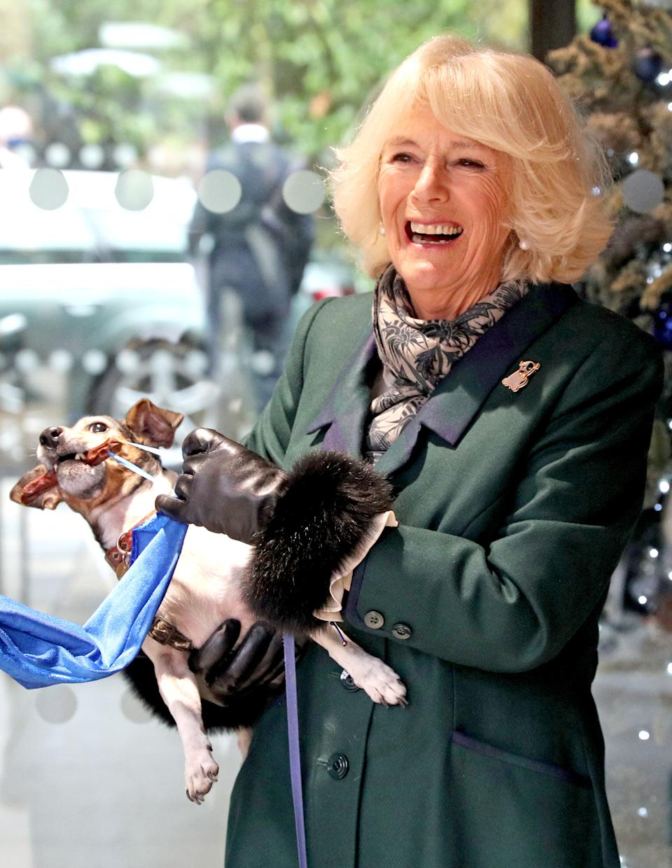 WINDSOR, ENGLAND - DECEMBER 09: Camilla, Duchess of Cornwall with Beth, her jack-russell terrier, unveiling a plaque as they visit the Battersea Dogs and Cats Home to open the new kennels and thank the centre's staff and supporters on December 9, 2020 in Windsor, United Kingdom. (Photo by Steve Parsons - WPA Pool/Getty Images)