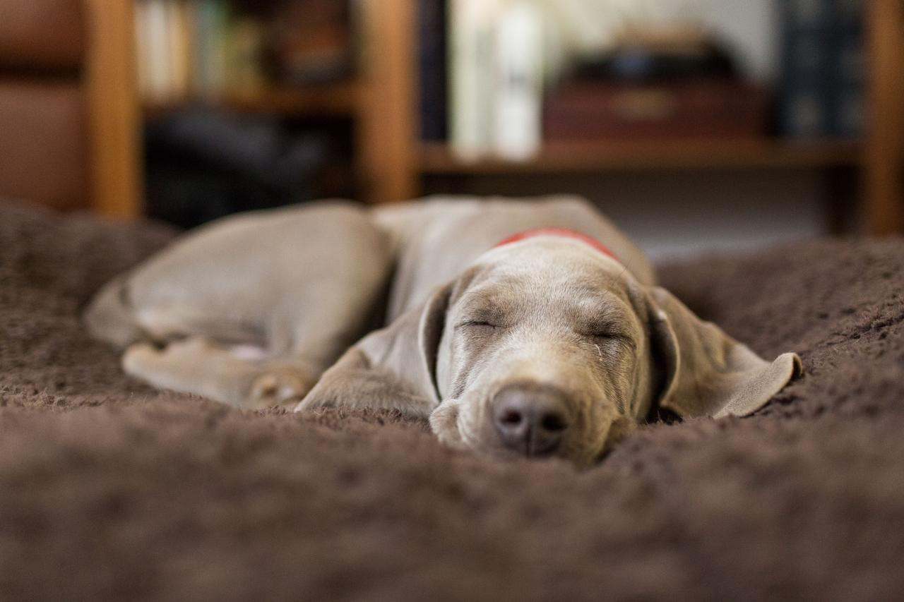 <p>Whether it's for humans or pets, having a comfortable bed is a key component in getting a good night's sleep. And while your four-legged friend might consider your lap to be a sufficient place to rest their head, pet parents know that a soft, comfortable pet bed can make all the difference in their dog or cat's world (and will certainly free up your lap). The following pet beds will take bedtime to the next level for your fur babies and have them feeling like the most special members of the family. There are classic, simple pet beds that are sure to please most animals, and some options that are a little more deluxe (if you happen to have a picky pooch). Whatever you choose, upgrading your pet's bed is a sure way to show them that you care and that you want them to have the sweetest doggy dreams. </p>