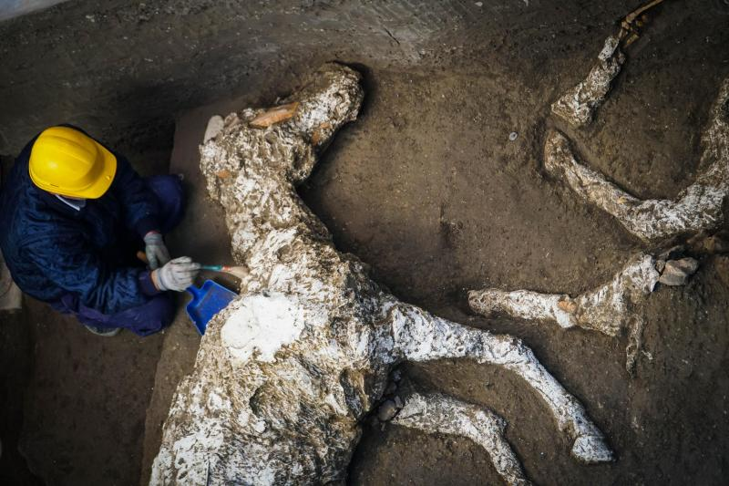 Petrified horse and saddle unearthed at ancient Pompeii villa