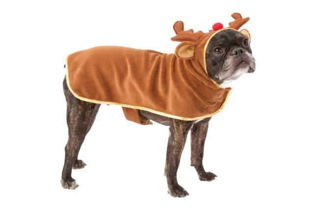 10 Adorable Dog Outfits for the Holidays
