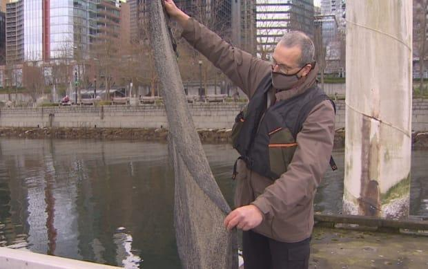 Marine biologist Doug Swanston holds up mesh fabric covered with tiny fertilized herring eggs. He is researching the impact of transplanting the eggs in the urban inlets of Vancouver.
