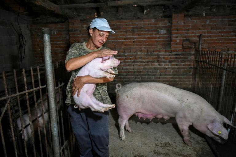 Farmer Vanya Dimitrova is one of several villagers in Bulgaria who has refused to cull her animals (AFP Photo/NIKOLAY DOYCHINOV)