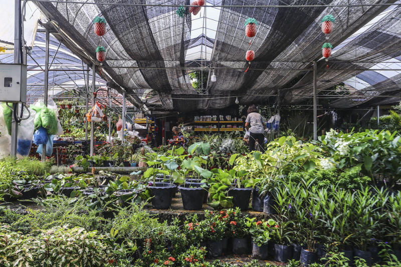 Valley of Hope is popular for gardening supplies among Kuala Lumpur 'green thumbs'. —Hari Anggara