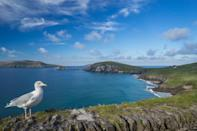 <p>Kerry has its share of peninsulas, and one of the most majestic is Dingle. Drive the twisty roads along verdant cliffs fall off into the bluest ocean. Along the way there are Christian monuments, Iron Age fortifications, and Dingle Bay — the setting for the movie <i>Ryan's Daughter</i>. <i>(Photo: Insight Vacations)</i></p>