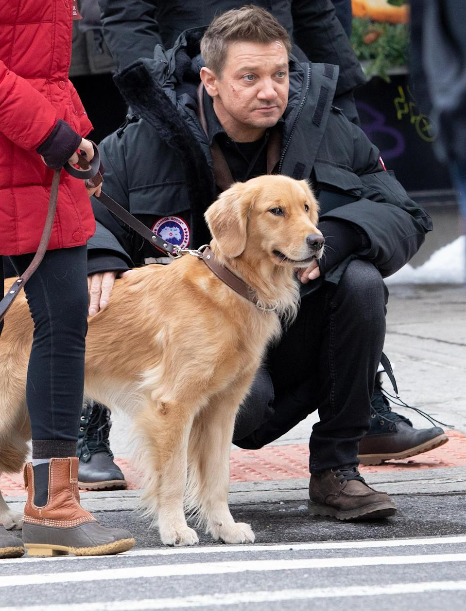 <p>Jeremy Renner poses with a sweet Golden Retriever on the set of <em>Hawkeye</em> on Tuesday in N.Y.C.</p>