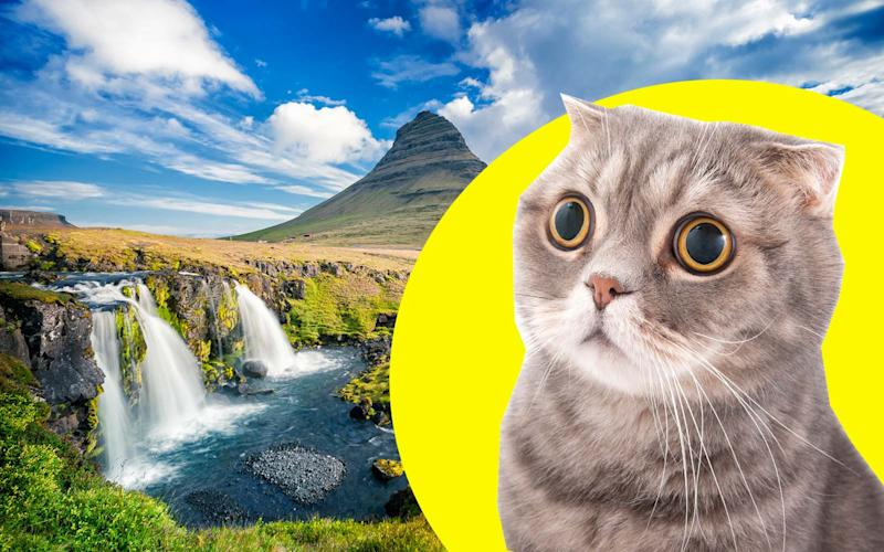Swiss Woman Smuggles Cat Into Iceland, Iceland Authorities Promptly Put It Down