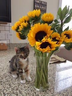 Beautiful flowers for an adorable Autumn.