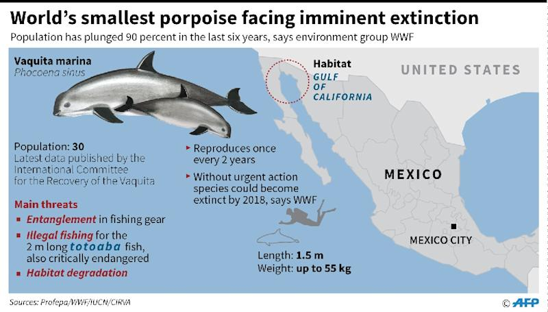 Factfile on the critically endangered vaquita marina porpoise. (AFP Photo/Adrian LEUNG, John SAEKI, Gustavo IZUS, Nicolas RAMALLO)