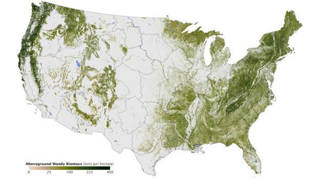 Where the wild things grow: NASA map shows virtually every tree in ...