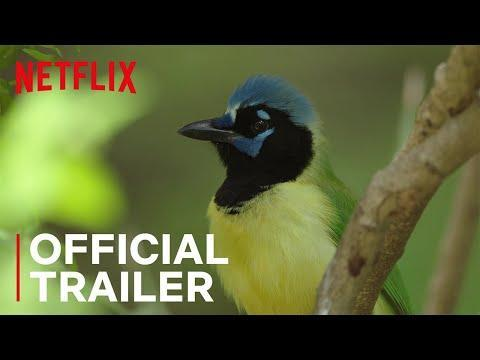 """<p><a class=""""link rapid-noclick-resp"""" href=""""https://www.netflix.com/title/80244682"""" rel=""""nofollow noopener"""" target=""""_blank"""" data-ylk=""""slk:STREAM NOW"""">STREAM NOW</a></p><p>If birds are totally your thing, you definitely won't want to miss <em>Birders </em>on Netflix. This nature documentary is all about how conservationists and bird watchers dedicate their lives to these incredible creatures. Highlighting birds on either side of the U.S.-Mexico border, bird watchers share their ideas for protecting and preserving some of the most rare and beautiful bird species in the world.</p><p><a href=""""https://www.youtube.com/watch?v=YT9hPCuncug"""" rel=""""nofollow noopener"""" target=""""_blank"""" data-ylk=""""slk:See the original post on Youtube"""" class=""""link rapid-noclick-resp"""">See the original post on Youtube</a></p>"""