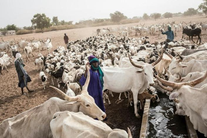 """Many Fulani in Louga have turned to the so-called """"Dolly Ranch"""" as a last resort (AFP Photo/JOHN WESSELS)"""