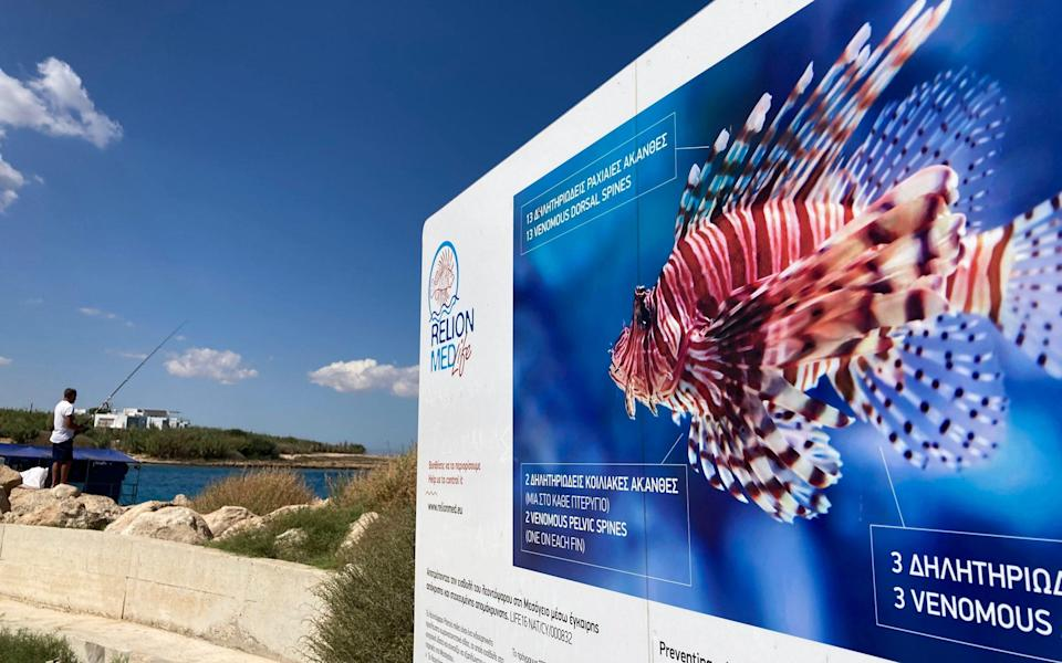A noticeboard warning of the dangers of the non-native lionfish, now common in Cypriot waters - Nick Squires