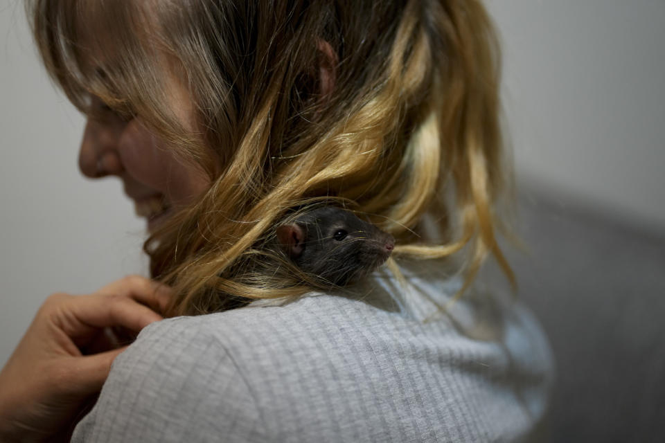 Solana Pesca holds one of her two pet rats, Reggea, at home in Buenos Aires, Argentina, Thursday, Sept. 16, 2021. Pesca, a zoo worker who handles rats as food for other animals, adopted Reggea as a pet when it was gifted to her during the COVID-19 pandemic lockdown, when she started living alone for the first time. (AP Photo/Natacha Pisarenko)