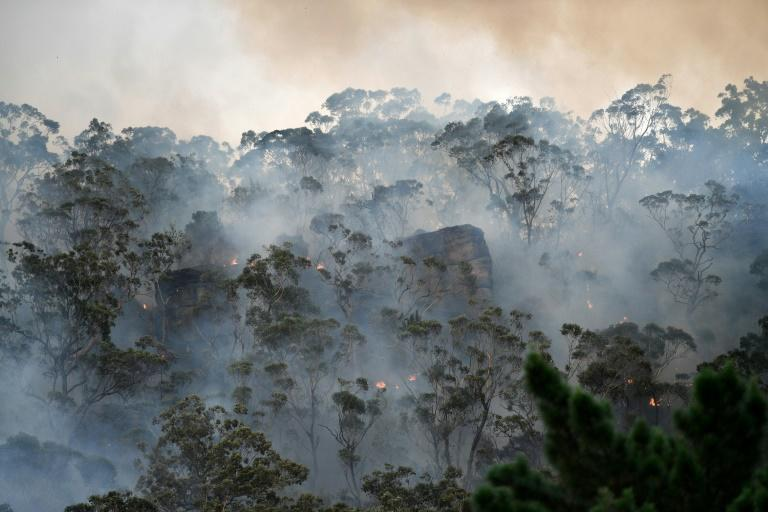 The devastating fires have focused attention on climate change, with scientists saying the blazes have come earlier and with more intensity than usual due to global warming and a prolonged drought