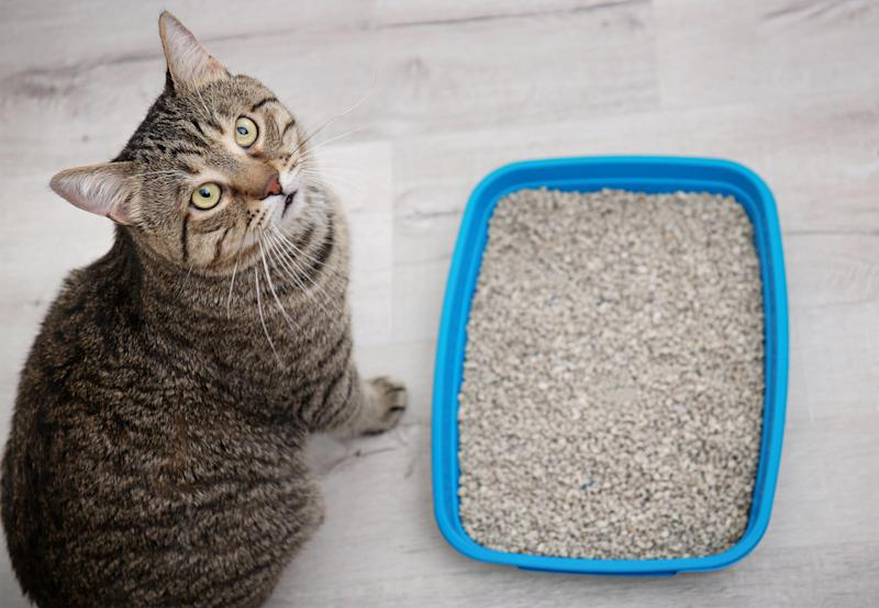 How To Get Rid Of Cat Urine Smell >> How To Get Rid Of Cat Pee Smell That Just Won T Go Away